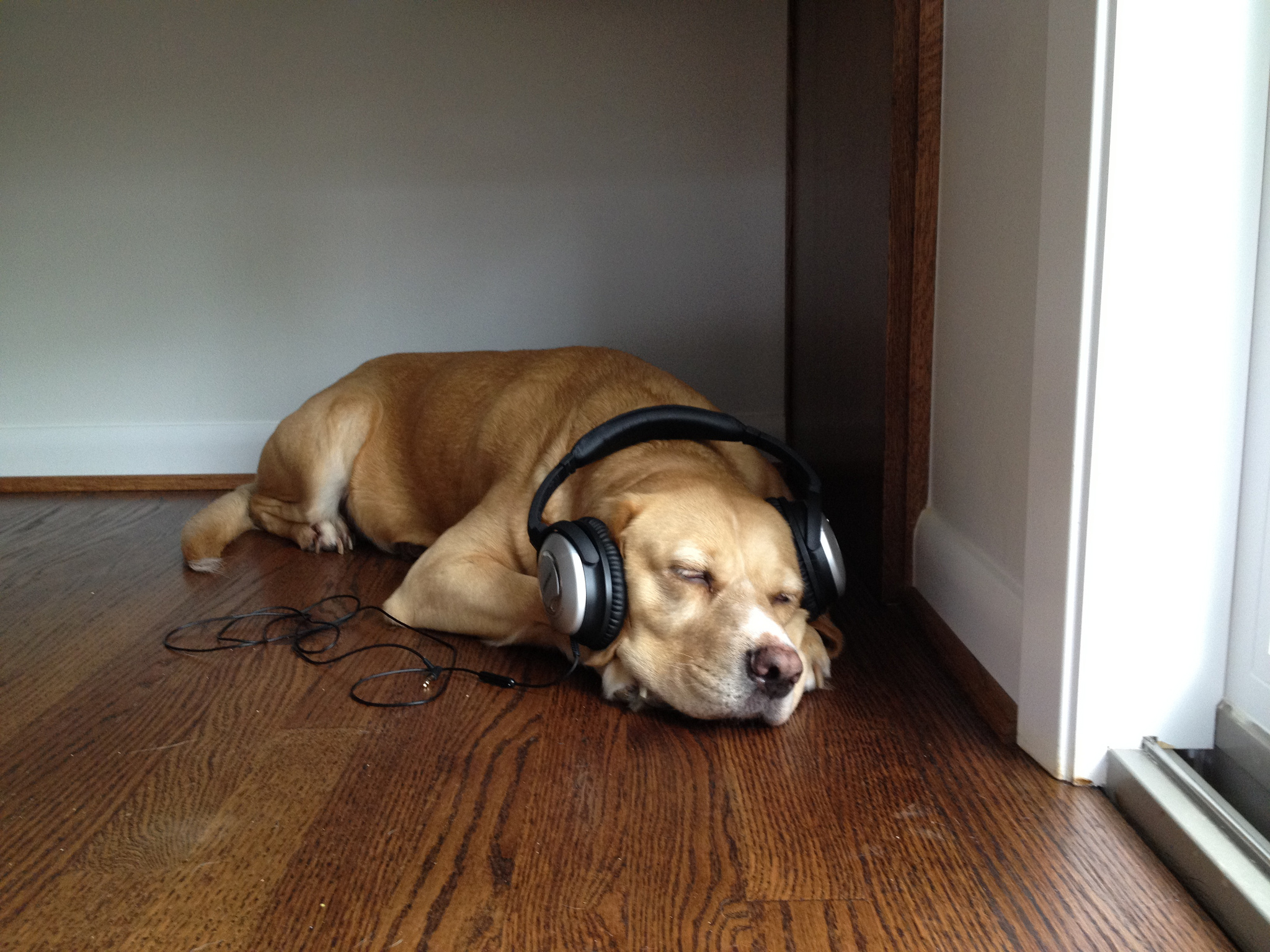 dog-headphones.jpg