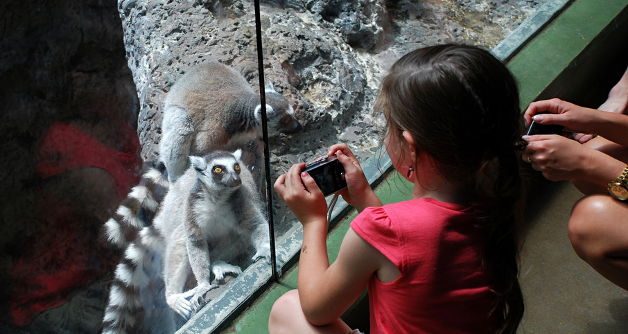 lemur-girl-zoo.png